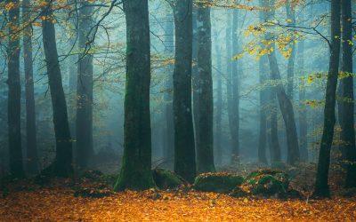 Skogsröj 60 x 120 cm